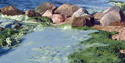 Lake Winnipeg algae blooms