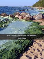 Algae blooms in the Lake Winnipeg Watershed