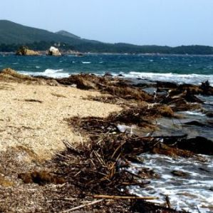 image of rough beach with sticks and rocks and waves in the distance