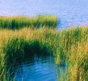image of marsh with water in the background
