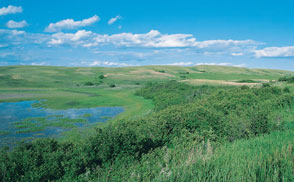 image of wetland with grassy shore and blue sky