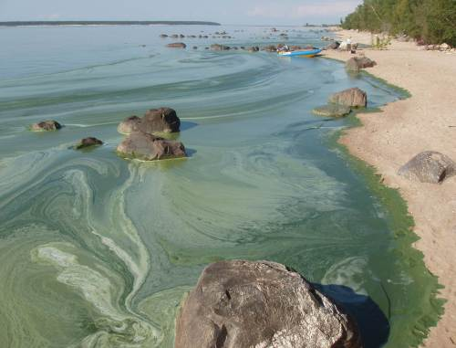 image of blue- green algae on beach