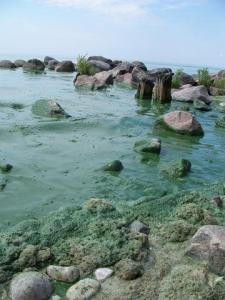 image of rocks in lake coated with algae