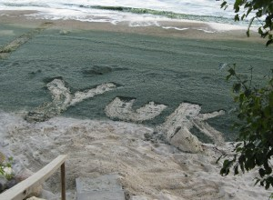 "image of word ""yuk' raked inot dired algae at the beach"