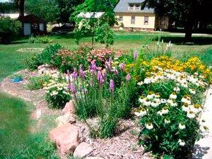 image of garden with native plants