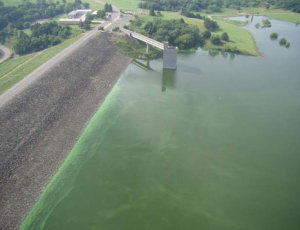 image of lake with very green colour from algae bloom