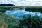 image of pond surrounded by reeds and prairie grasses