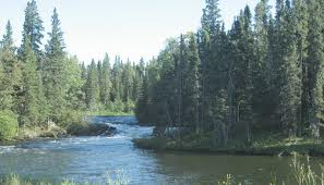 Manitoba's Boreal , photo courtesy of Liberals blogspot