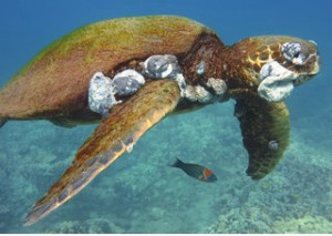Turtle with tumours