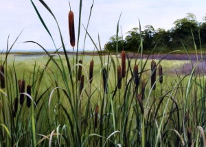 Coastal wetland on Lake Winnipeg