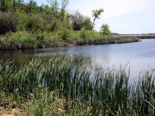 Grand Beach wetlands