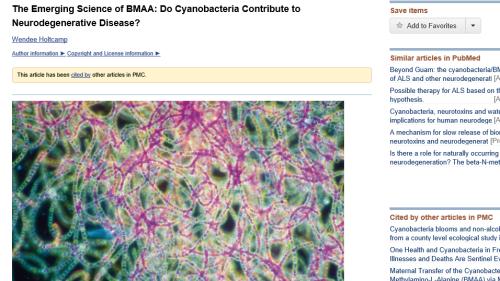 BMAA link to Neurodegenerative diseases