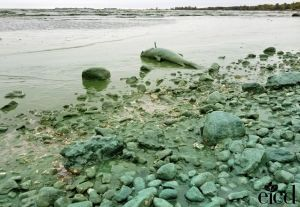 fishshoreline Gimli EICD
