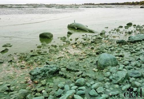 fishshoreline Gimli EICD.jpg